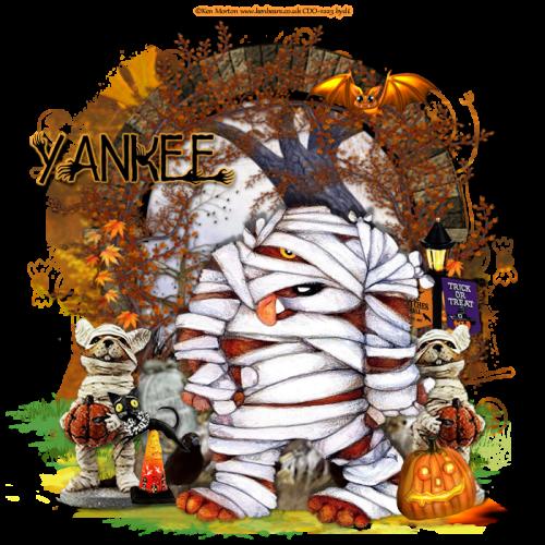 Image2yankee